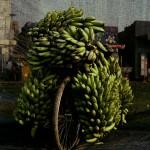 Beladenes Fahrrad mit Bananen